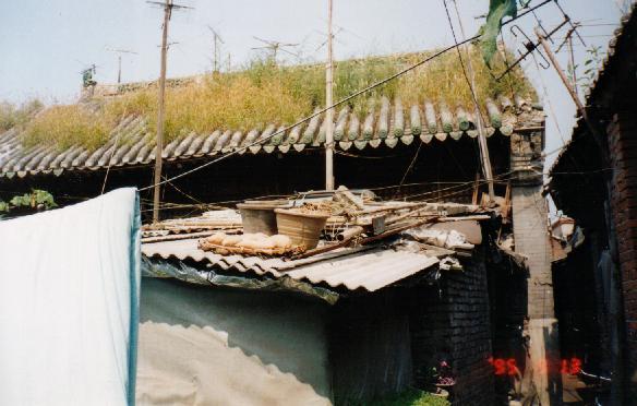 huoshen002.jpg